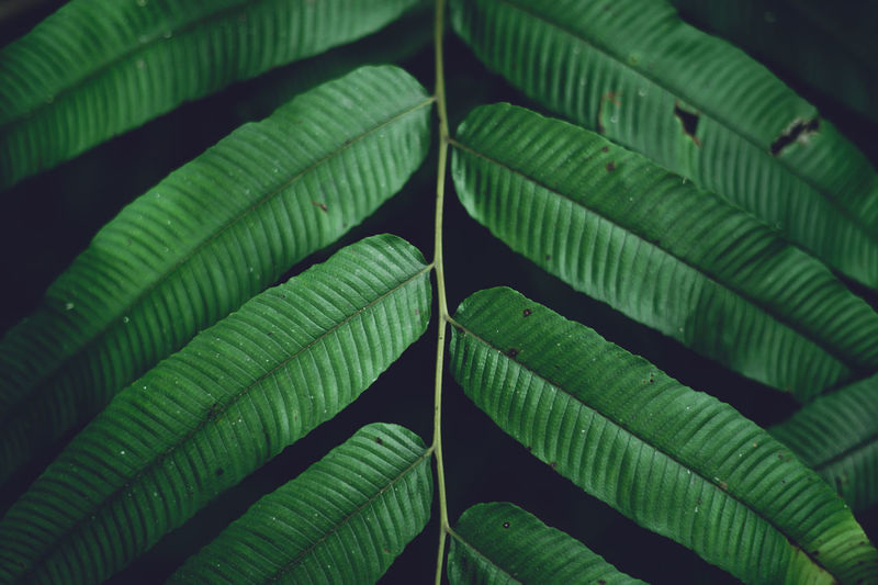 Green Color Leaf Plant Part Close-up Plant Growth No People Nature Beauty In Nature Full Frame Day Pattern Natural Pattern Leaf Vein Leaves Outdoors Focus On Foreground Freshness Backgrounds Botany Palm Leaf