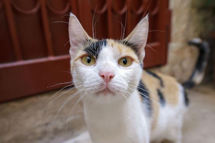 Animal Animal Eye Animal Head  Animal Themes Cat Pets Selective Focus Wide Angle