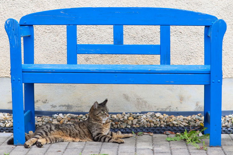 Portrait of cat sitting on bench