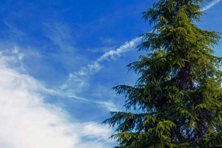A700 365project Photooftheday Tree Sky Blue Low Angle View Nature Cloud - Sky No People Outdoors Day Beauty In Nature Palm Tree Freshness