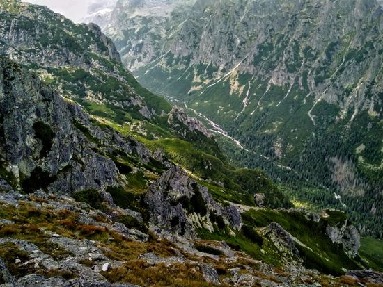 2200m Mountains View Nature Tatry Slowakia Poland Valley Tree Mountain Cold Temperature Landscape Close-up