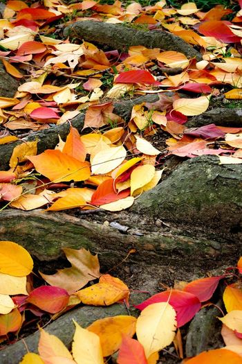 NYC New York Urban Nature Nature Fall Trees Taking Photos