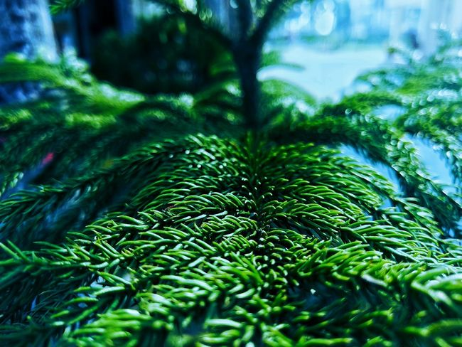 Nature Green Color Beauty In Nature Pinaceae Growth Tree Pine Tree Outdoors Forest Freshness Grass No People Plant Water Close-up Day Lush - Description Fern