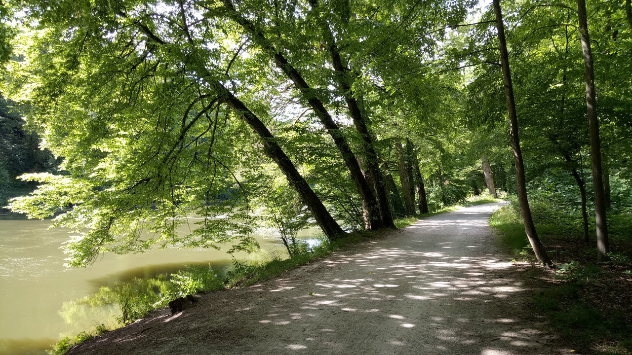 tree, nature, the way forward, tranquility, tranquil scene, day, outdoors, forest, growth, no people, scenics, road, beauty in nature, branch