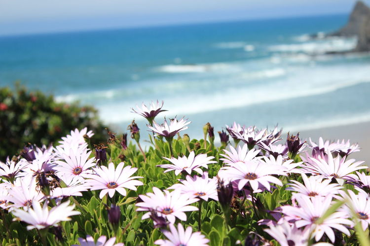Close-up of flowering plants by sea