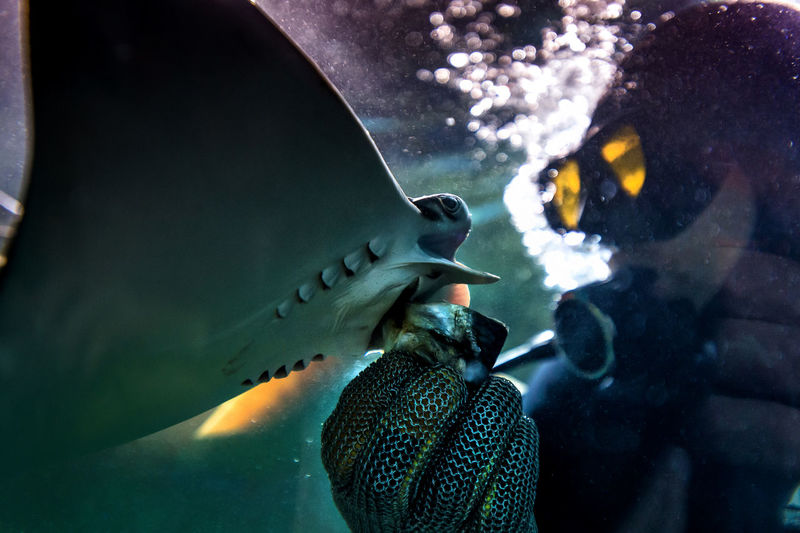Close-up of person feeding shark in aquarium