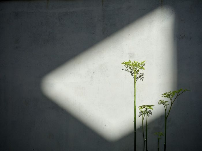 Sunlight falling on plants against white wall