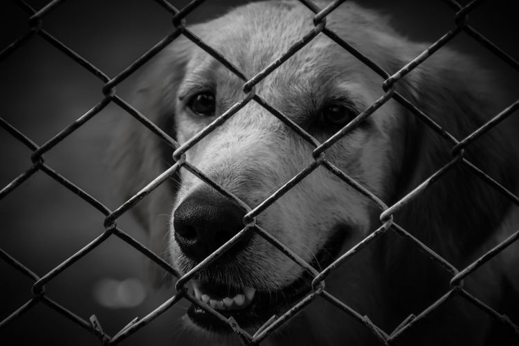 Close-up of dog through chainlink fence