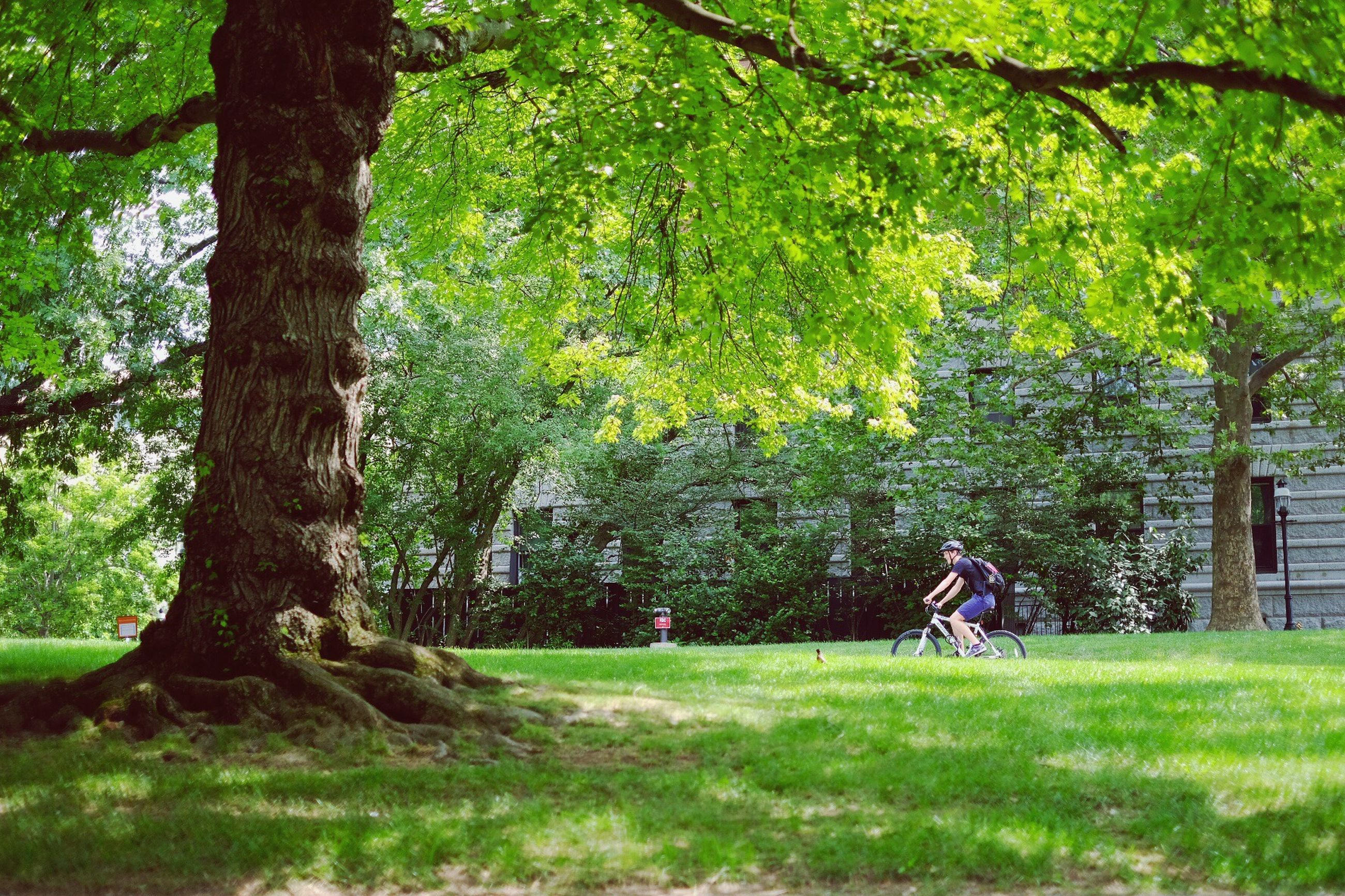 tree, nature, growth, grass, tree trunk, tranquility, beauty in nature, tranquil scene, green color, bicycle, forest, day, outdoors, branch, landscape, scenery, one person, people