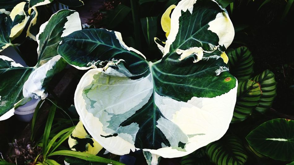 Greens Yellow White Gray All In One  Plants EyeEm Nature Lover Danielstowe Botanical Gardens Natural Beauty Conservatory Greenhouse Color Palette