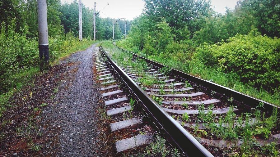 Rails Nature Russian Railways