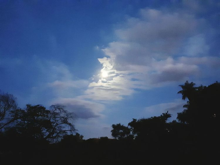 Tree Sky Cloud - Sky Blue Nature Silhouette Beauty In Nature
