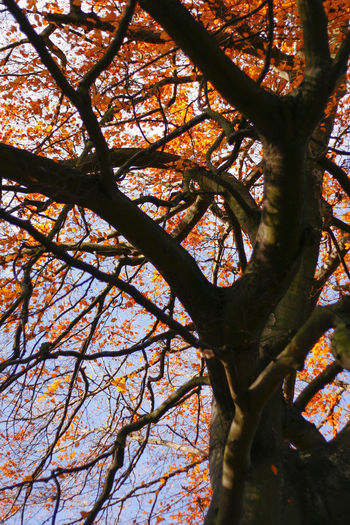 Autumn Colors Autumn Leaves Best EyeEm Shot Autumn Beauty In Nature Branch Close-up Day Growth Leafes And Sky Low Angle View Nature No People Outdoors Sky Tree Tree And Blue Sky Tree Trunk