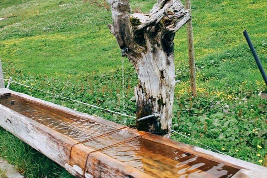 Drinkingfountain Wateringhole Switzerland Gimmelwald Jungfrau Mürren