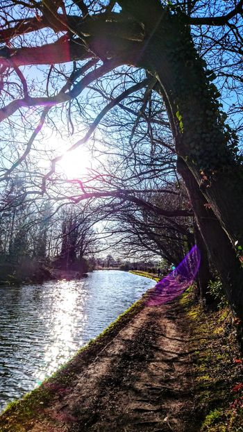Watet Reflection_collection Canal Sunlight Nature Tree Water Outdoors Day No People Tranquility Sky
