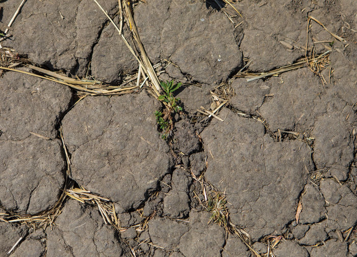 High angle view of dry plant on rock
