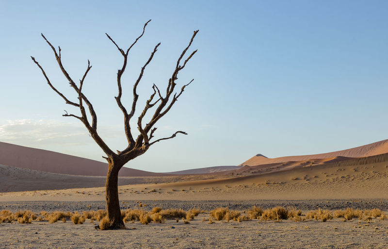A Daad Tree at