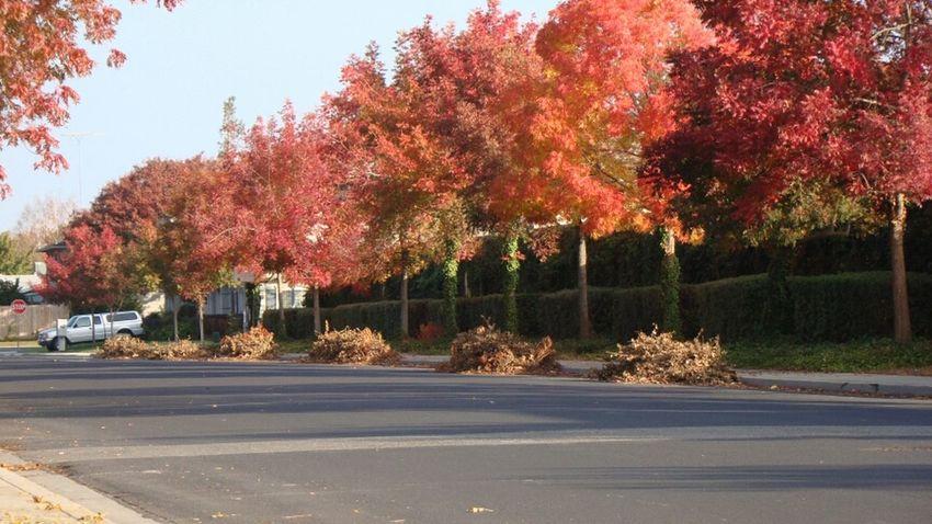 Autumn Autumn Leaves Tree Lined