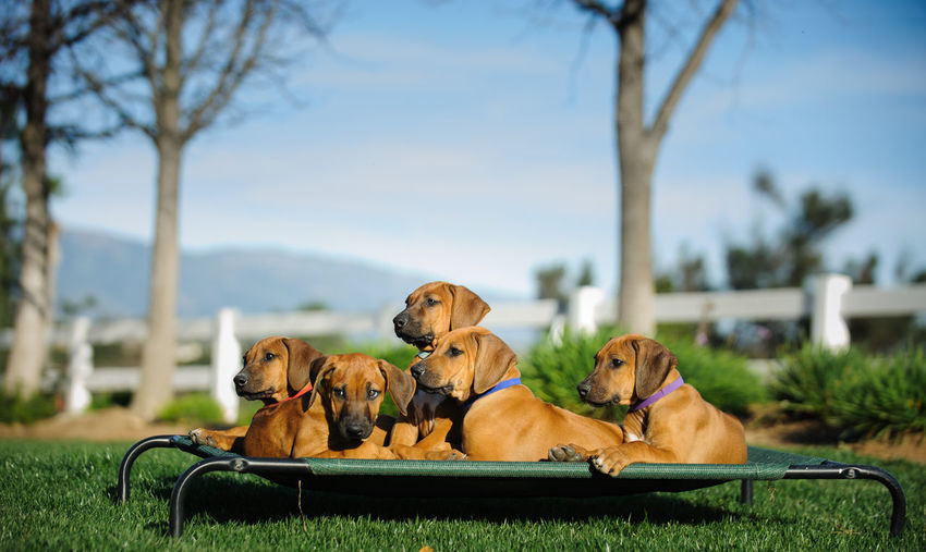 Close-up of dogs sitting on bed over grass field