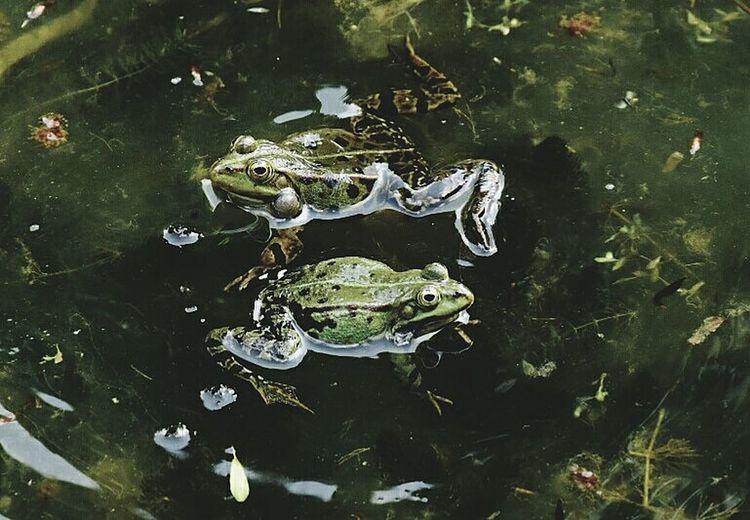UnderSea Water Sea Life Swimming Alligator Underwater Reptile Close-up Animal Themes