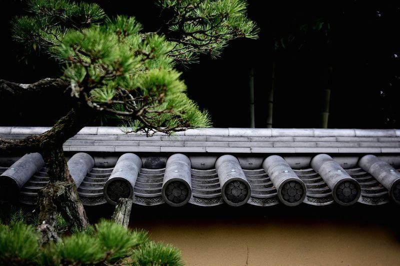 Trees by daitokuji temple