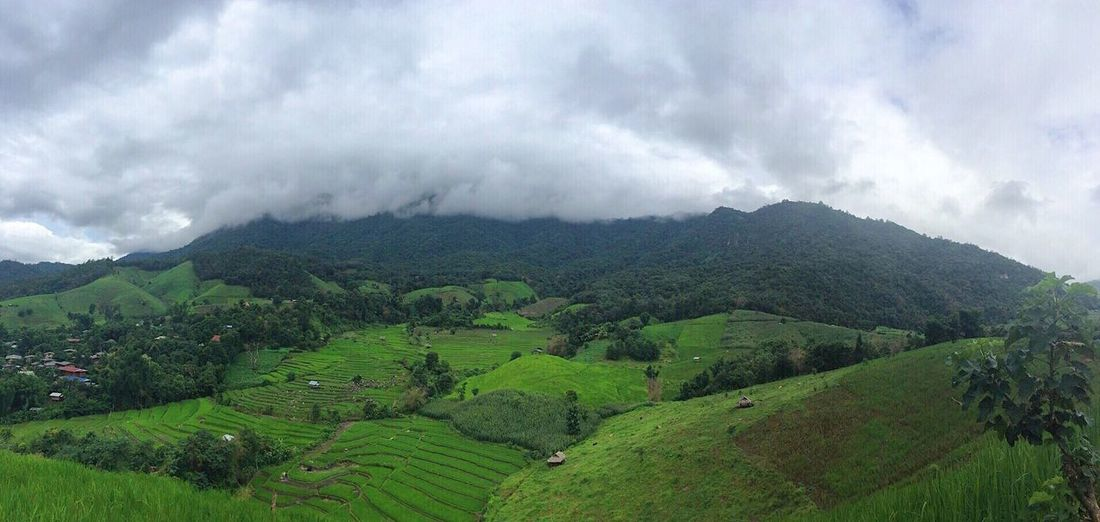 นาขั้นบันได ป่าบงเปียง Mae Chaem Chiang Mai | Thailand Agriculture Beauty In Nature Mountain Nature Landscape Cloud - Sky Sky Field Tranquility Scenics Outdoors Tranquil Scene Day Rural Scene Growth No People Green Color Clouds And Sky Cloudy Cloud Rice Seeding