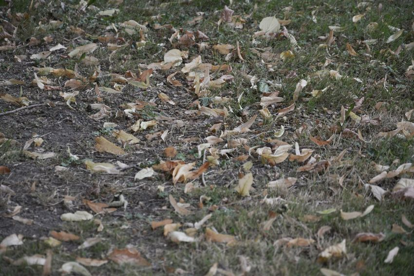 Autumn Change Day Dry Fallen Fallen Leaf Field Fragility Grass Grassy High Angle View Land Leaf Leaves Messy Natural Condition Nature No People Non-urban Scene Outdoors Season  Surface Level Tranquility Uncultivated