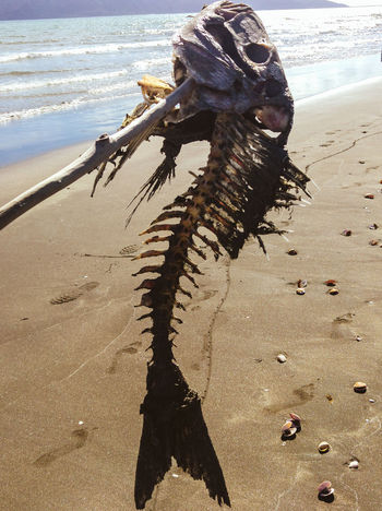 Great Outdoors With Adobe Fish Bones Beach Find Sand Beach Photography