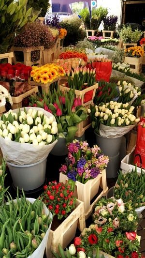 Amsterdamcity Flowerlovers Flowers, Nature And Beauty Giftideas Girly Things  Flower Collection