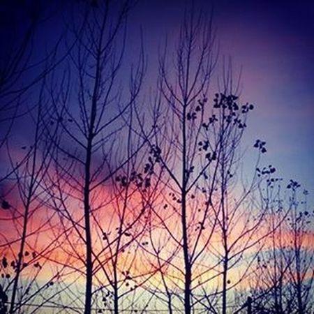 At sunset.Lanscape_lovers Lanscapephotography Outdoors Colourful Sunset Treeshunter Tree_captures Naturelovers Wanderlust Tree Naturalife Beautiful Sky Instagood Instagram Outdoorphotography Natural Instago Landscape Instagood Instacool Photooftheday Bestoftheday 20likes