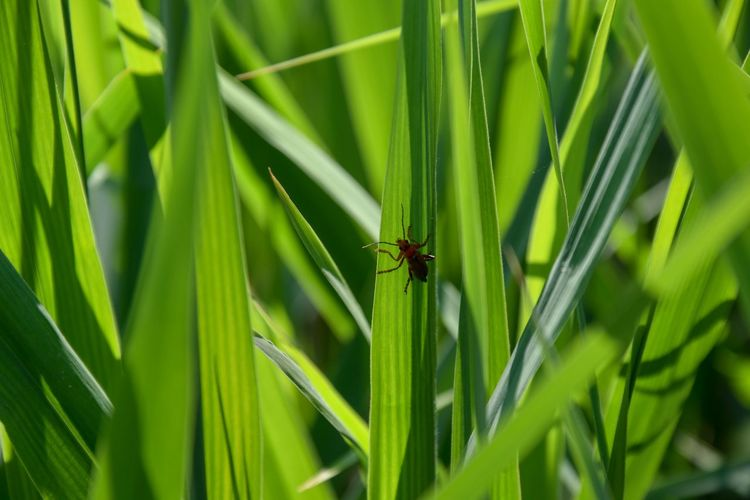 Spring Green Green Color Sun Phragmites Phragmites Australis Poaceae Animal Themes Animal Insect Invertebrate One Animal Animal Wildlife Animals In The Wild Green Color Plant Leaf Plant Part Nature Close-up Day Grass No People Beauty In Nature Focus On Foreground Outdoors Growth