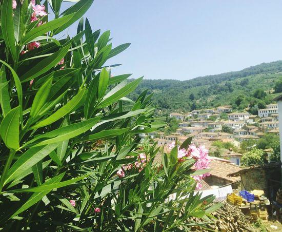 Turkey View Sirincevillage Sirince Selçuk Touristic Village Vine
