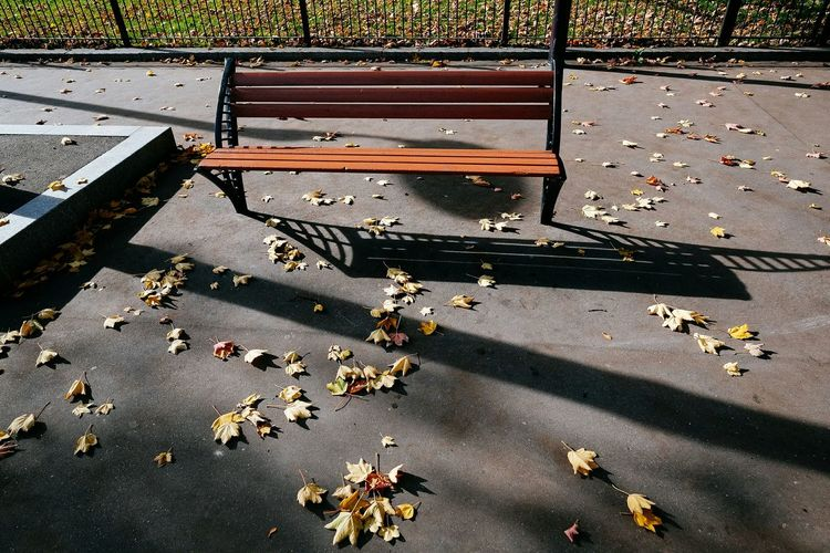 High Angle View Of Bench Amidst Leaves In Park