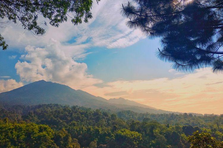 Galunggung Mountain in the Morning Galunggung Mountain Close-up Branch