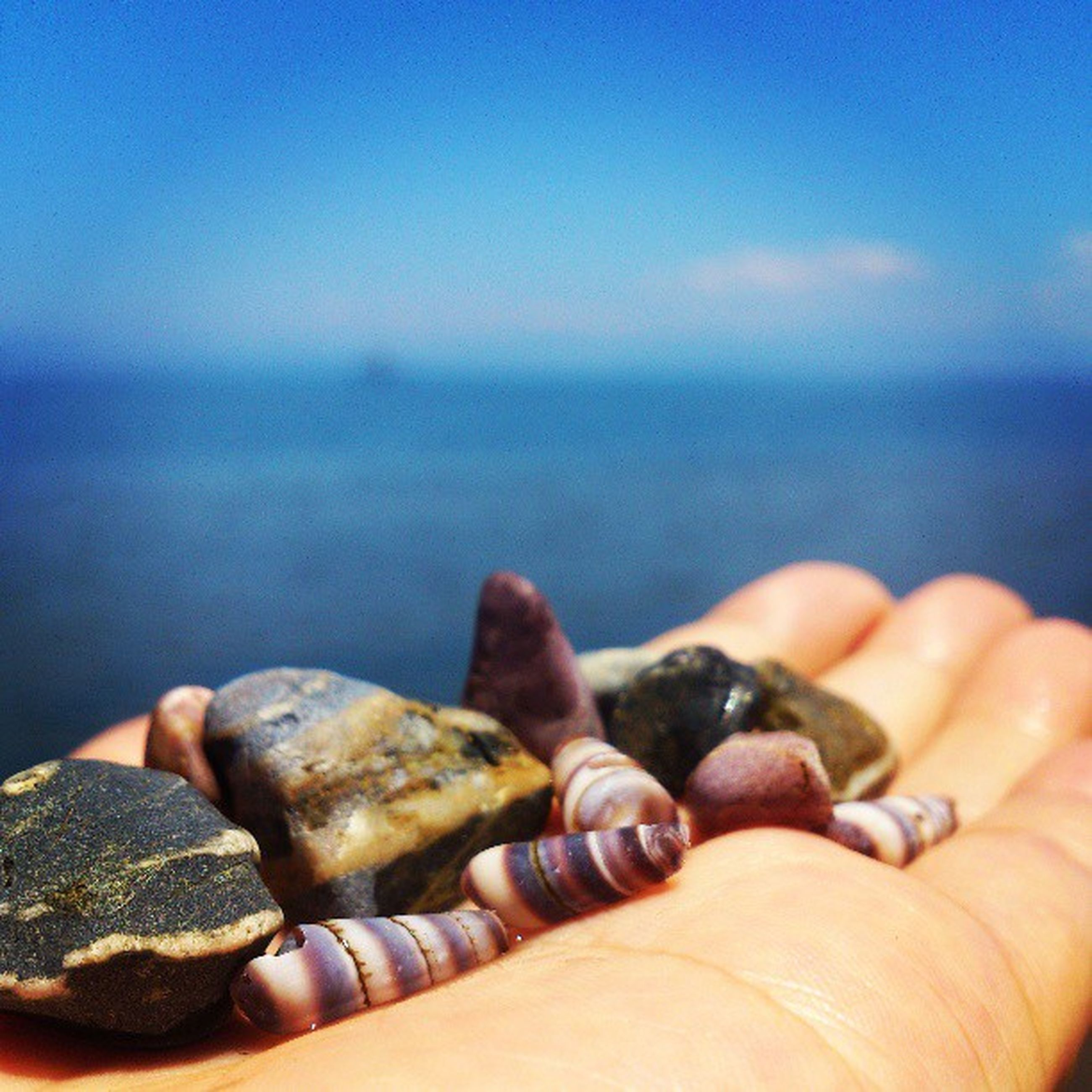person, part of, sea, human finger, cropped, beach, personal perspective, holding, unrecognizable person, close-up, focus on foreground, seashell, water, sky, leisure activity, horizon over water, lifestyles