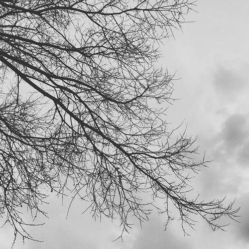 Nervios Skies Skies And Clouds Cielosdeespaña Enjoying Life Eyeemnaturelover Plants 🌱