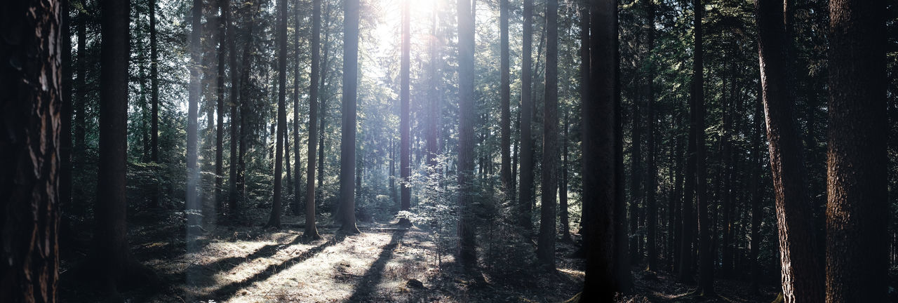 "In the deep forest called ""Spessart"" in Germany. DEEP FOREST EyeEmNewHere Panoramic View The Great Outdoors - 2018 EyeEm Awards Beauty In Nature Darkness And Beauty darkness and light Darkness In The Light Forest Forest Photography Forest Trees Landscape Outdoors Panoramic Landscape Panoramic Photography Sunbeam Sunlight Tree WoodLand"