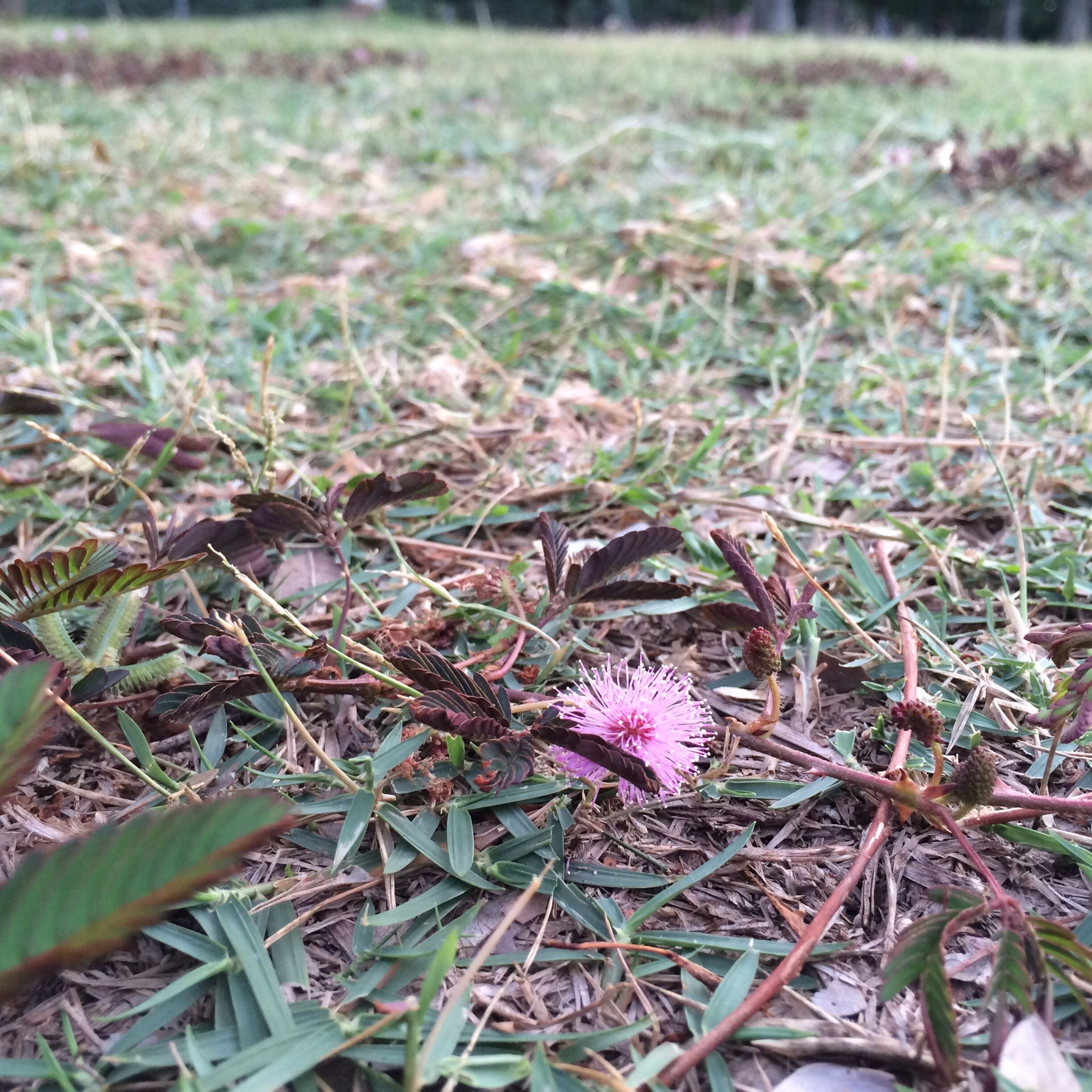 grass, flower, growth, fragility, field, plant, nature, freshness, focus on foreground, beauty in nature, close-up, petal, grassy, flower head, blooming, selective focus, day, outdoors, high angle view, no people