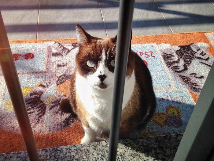 High angle portrait of cat sitting