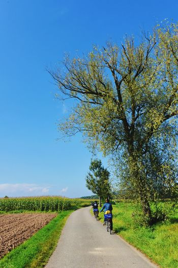 Cycling in country side Tree Transportation Growth Day Road The Way Forward Nature Clear Sky Blue Beauty In Nature Rural Scene Field Outdoors Land Vehicle Scenics Landscape Sky Togerherness People Ccountry Side Cycling Travel Photography Corn Yard Blue Sky Lost In The Landscape