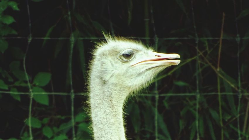 Bird Animal Head  Animal Body Part One Animal Close-up Animal Wildlife ZooLife