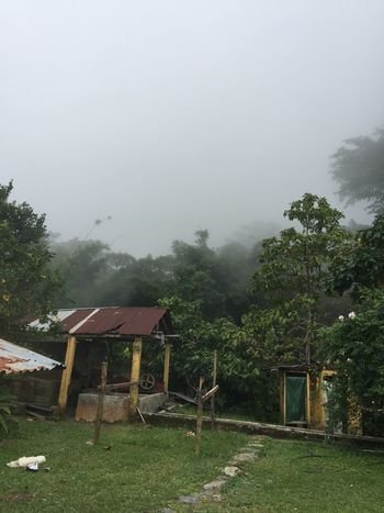 Colombia Coffee Plantations