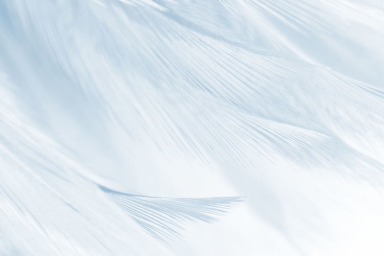 White Color Pattern Textured  No People Backgrounds Abstract Feather  Close-up Full Frame Nature Outdoors Simplicity Motion Day Selective Focus Beauty In Nature Copy Space Leaf Abstract Backgrounds Softness Palm Leaf