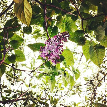 Flower Growth Fragility Nature Beauty In Nature Branch Freshness Day Plant No People Leaf Petal Low Angle View Outdoors Tree Close-up Flower Head Blooming Tranquil Scene Marquette Michigan Life Tranquility Beauty In Nature Landscape