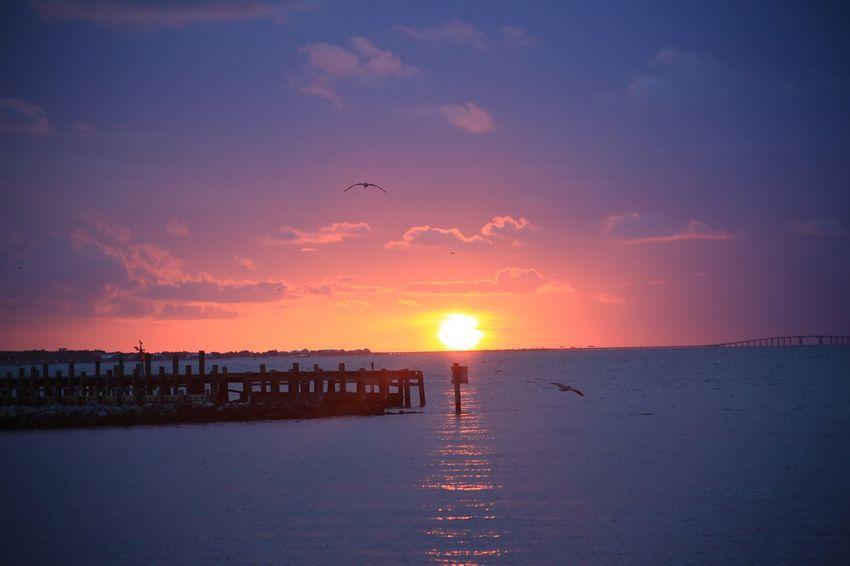 Mobile Bay Alabama Fort Morgan Ocean Clouds Pier Pelican Sky Sunset Water Beauty In Nature Scenics - Nature Sea Sun Tranquility Orange Color Tranquil Scene Nature Sunlight Cloud - Sky Idyllic Horizon Beach Silhouette Land Bird Horizon Over Water