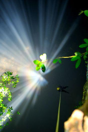 The Light of Heaven Climbing Cave The Light Of Sun Jomblang Cave Tree Adventure Light Beam Sunlight Sport Sky Close-up