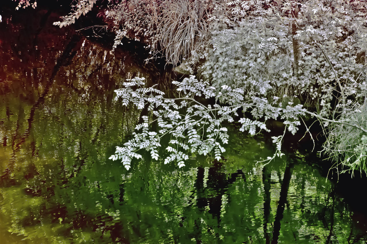 SCENIC VIEW OF LAKE AND WHITE FLOWERING PLANT