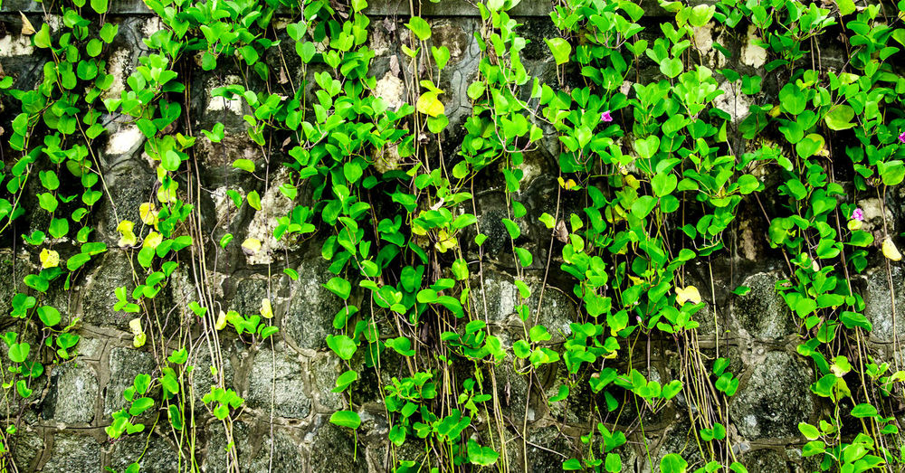 The wall from brick and brick background with grass on below, red brick and grass on below and pattern of brick wall background, old brick wall texture with grass on below Brick Wall Grass Wall Brick Close-up Day Fragility Freshness Full Frame Grass Wall Green Color Growth Ivy Leaf Nature No People Outdoors Pattern Plant Wall Grass Wall Green
