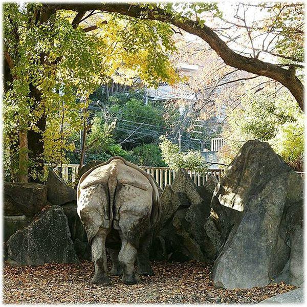😸 素敵な後ろ姿🎶☺ Nice from behind🎶☺ ※ ※ 素敵 Nice 後ろ姿 Backshot サイ Rhinoceros 動物 Animal 風景 Landscape 自然 Nature 名古屋 Nagoya 日本 Japan Aichi 眺め 眺望 View 展望 Outlook Vista 景色 Scenery 😸 view_Japan_nagoya_mitu