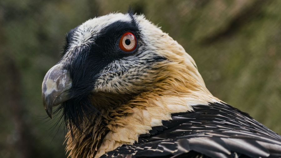 Close-Up Of Vulture In Zoo